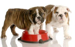 Una alimentación adecuada para el cachorro